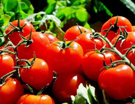 keříková rajčata